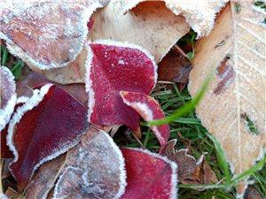 霜�~�t于二月花。