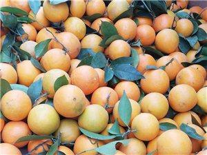 收购中小果、次果、乌皮橙,有的请联系