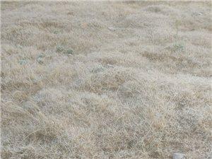 天冷草上霜,一片白茫茫,晨�升空照,消失影�o�,