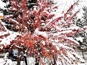 雪是冬的灵魂也是冬的情人