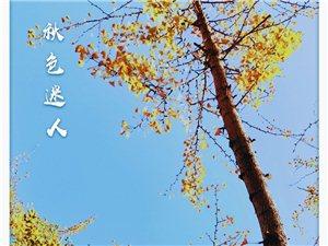 秋景值得回味