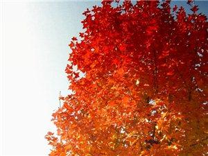 《龙凤谷》的红叶美得让人舒心!爽心!