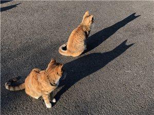 如影�S形我��的朋友――影子