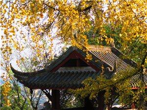 再游琴泉寺
