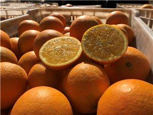 求购寻乌本地树上鲜果1-3万斤果园均可
