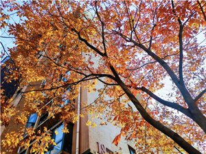 今天拍�z的照片,怎么看都像秋天。