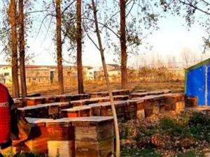 """澳门威尼斯人娱乐网站养蜂人追逐的""""甜蜜的事业"""""""