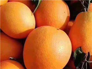 需要�I奉��橙的加第一��vx�系我自家�N植,正宗奉��橙,�煸�渖腺u,不打�、不崔熟,�o防腐��,