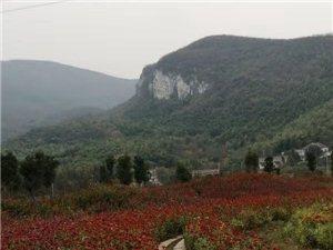 大山深处,盛开着一种美丽的花朵