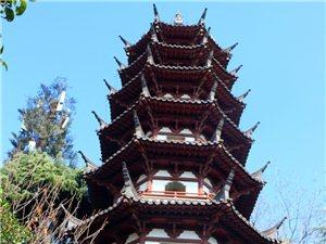 南京白鹭洲