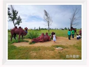正蓝旗浑善达克生态园冬夏时节景色