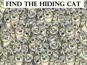 你在下面图中,十分钟找出一只猫算你厉害