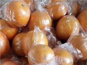 有脐橙一千五百多斤左右,有需要的来看果