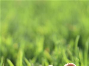 �@蘑菇,喜�g拿去做手�C壁�拍�z地�c:#珠海度假村酒店�坌�u#�z影:#珠海度假村酒店�z影��梁才有#