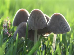 这蘑菇,喜欢拿去做手机壁纸拍摄地点:#珠海度假村酒店爱心岛#摄影:#珠海度假村酒店摄影师梁才有#