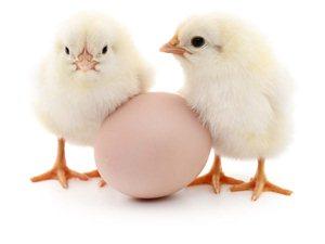 先有鸡?还是先有蛋?有结果了