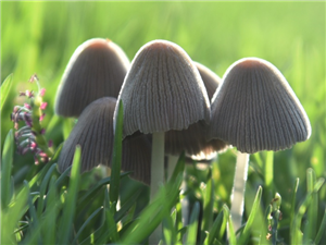 你看这小蘑菇,它可以做壁纸吗?
