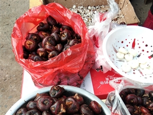 走,挖地梨子去,一年一度的地梨子丰收的时间到了,真不错又大又甜又脆,味道不错。