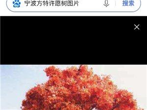 昌州其林岸看看