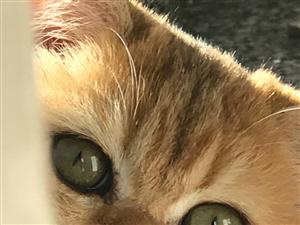 过年期间上门喂猫服务
