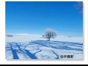 冰雪覆盖绿色之后,来年会有多么美丽!