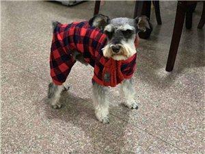 有见到这只狗狗吗?在永春北环走丢