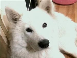有人要�I�B狗狗��?