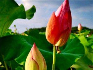 一组花与自然之美