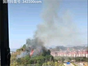 发生火烧山,森林防火人人有责,失火烧山,牢底坐穿!