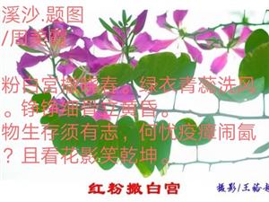 周美霞词/2020.1.31.