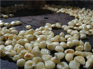 为了响应新型冠状病毒,禁止外出,在乡下烤玉米吃。