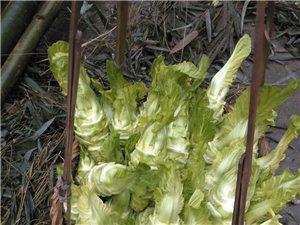 景家�洗�,有菜�^,�]��可放一星期,菠菜,蒜苗,�Z食�u蛋不多,��18161151785