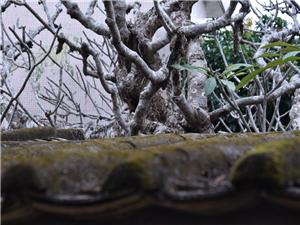 屋檐&树摄影:珠海度假村酒店摄影师梁才有