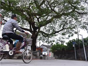 我的伞摄影:#珠海度假村酒店摄影师梁才有#