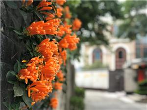 绽放摄影:#珠海度假村酒店摄影师梁才有#