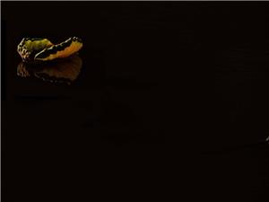 【库存分享】孤摄影:#珠海度假村酒店摄影师梁才有#