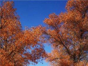 秋,深藏的一片色彩