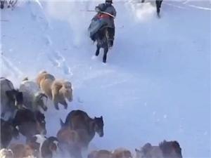 冰天雪地,骏马奔腾