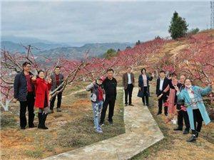 三标桃花林是寻乌的网红地,据说去了都能成网红,你有去过吗?