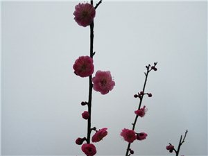 一树红花,祝半边天天天快乐