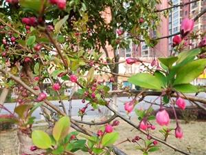 春日,道上花开