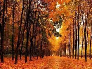 浣溪沙.诗吟植树节:(当年国家创意开始了植树节:生日植、爱情植、友谊树、企业树、生