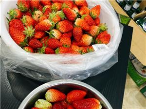 吃草莓么?