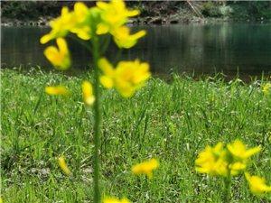春暖花开。