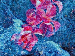 二次曝光―水中红叶
