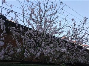春分秋分,昼夜平分。春分春分,百草返青。希望春常在,花常开