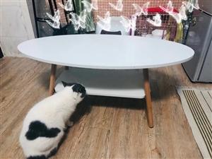 有没有要领养猫咪的盆友丫