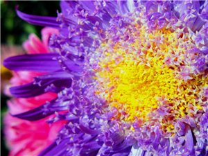 花卉摄影一组