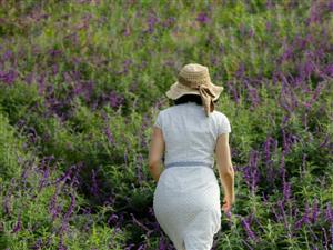 你以�檫@是薰衣草�幔坎唬��@是紫�q鼠尾草,可�F了,一�w都要十��K,�@么一片草地都要�资��f,要拍美照就快
