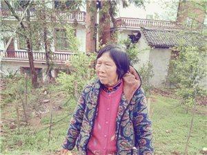 攸�h�と�⑹�,周祖��,女,72�q(老年�V呆)5月8�下午在佳�_小�W走失!